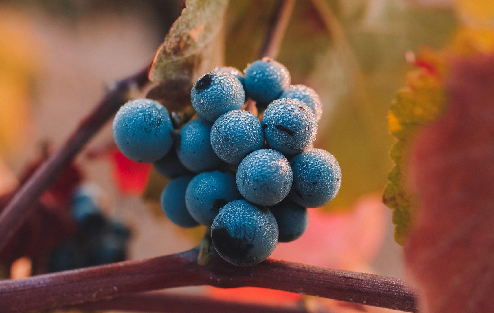 WineParis Winexpo 10-12 Feb